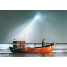 Boot Stormvogel