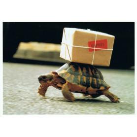 Schildpad express