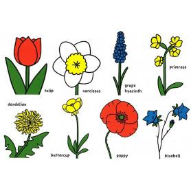 Nijntje - Bloemen