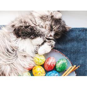 Kat met gekleurde eieren