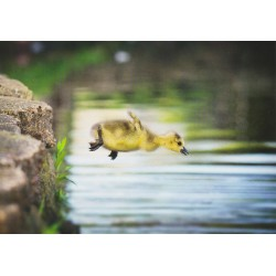 Flying ducky