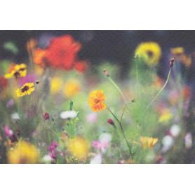 Bloemenweide