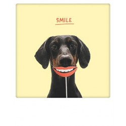 Pickmotion  - Smile