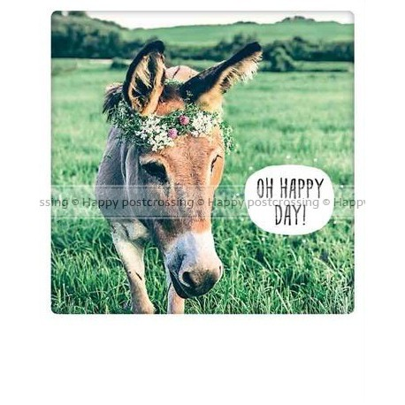 Pickmotion  - Happy donkey