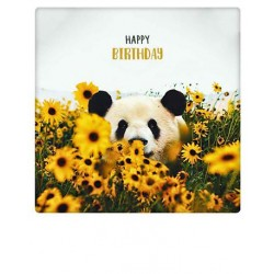 Pickmotion  - Birthday panda