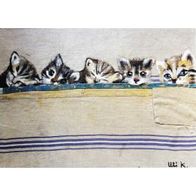 Vijf kittens