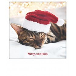 Pickmotion - Merry Christmas cat