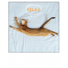 Pickmotion - Cat's life