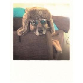 Polacard - Hond met bril