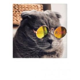 Polacard - Jarige kat