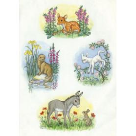 Molly Brett - Multiple animals