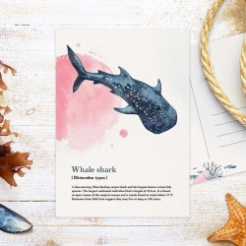 Studio Draak - Whale shark