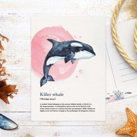 Studio Draak - Killer whale