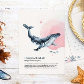 Studio Draak - Humpback whale