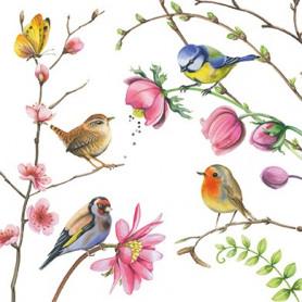 Edition Gollong - Common birds