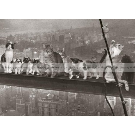 Cats at height