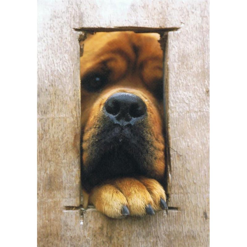Hond en schutting