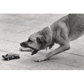 Hond met autootje