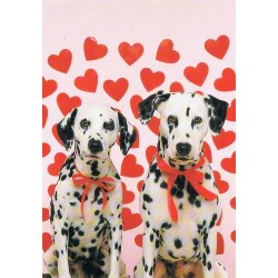Hondenliefde