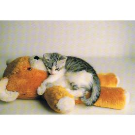 Kitten met teddybeer