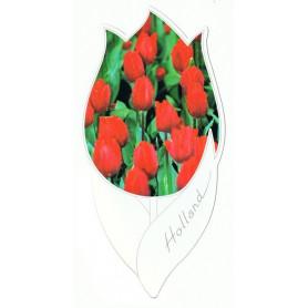 Tulpkaart 142