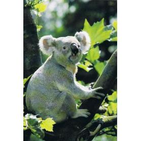 Koalabeertje