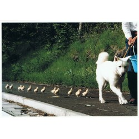 Hond met kuikens