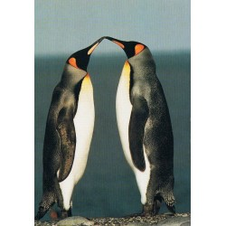 Kissing pinguins