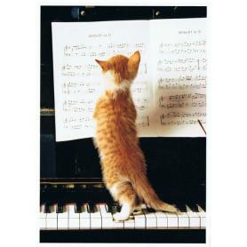 Kattenmuziek