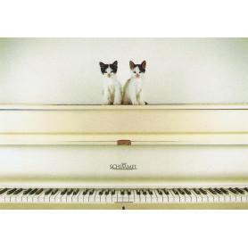 Piano kittens