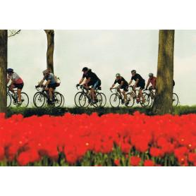 Wielrennen langs de tulpen