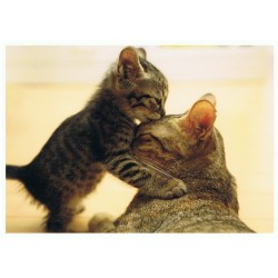 Poes met kitten