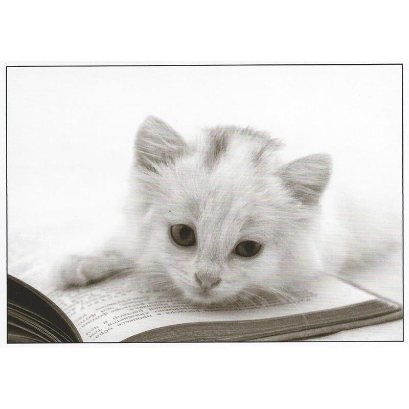 Kitten op boek