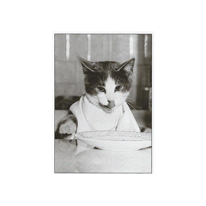 Kat met slabbetje