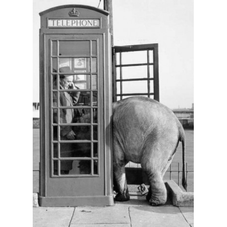 Elephant Telephone