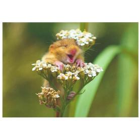 Hazelmuis in de bloem