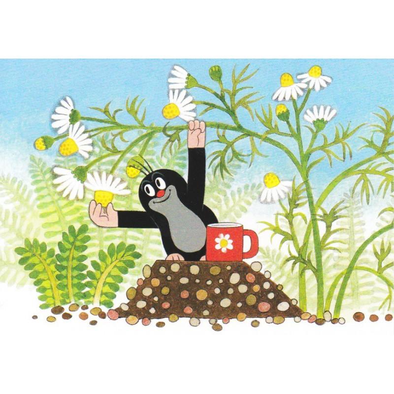 Krtek - bloemen plukken