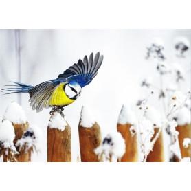 Pimpelmees in de sneeuw