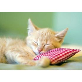 Kitten op kussentje