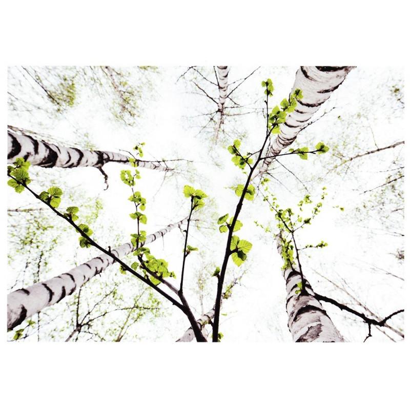 Berkenwoud