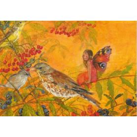 Vlinderelfje