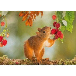 Squirrel with raspberries