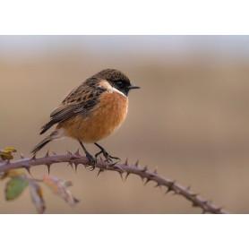 Bird on branche