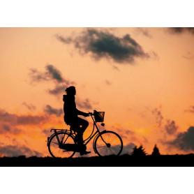 Cyclin till dawn
