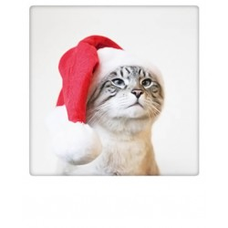 Pickmotion - Christmas cat