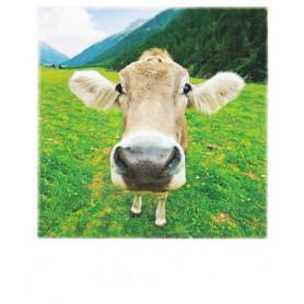 Polacard - Cow close-up