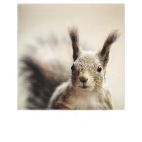 Polacard - Eekhoorn