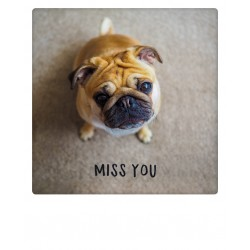 Pickmotion - Miss you pug
