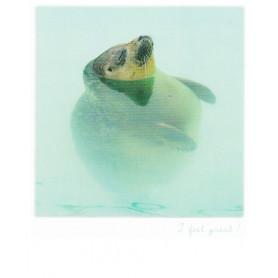 Polarcard - Zeehond