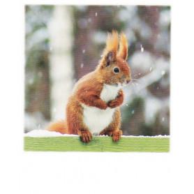 Polacard - Winter Eekhoorn